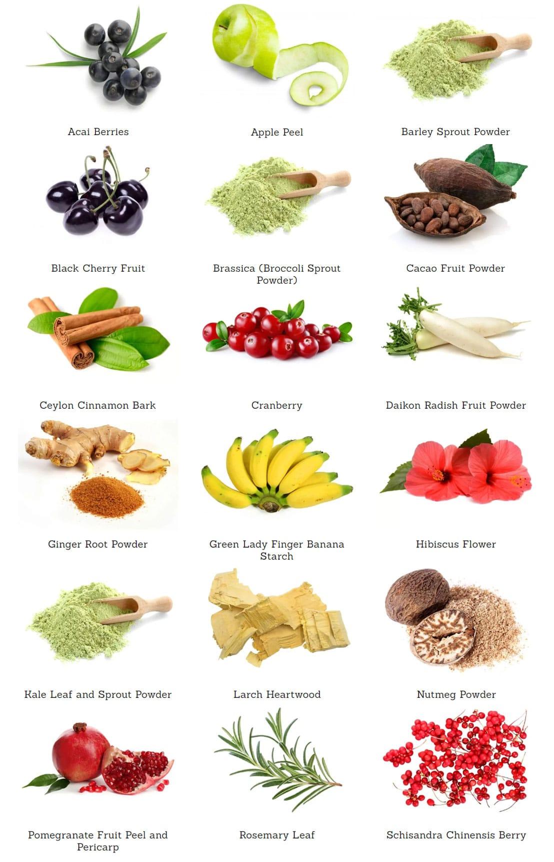 ATP Science gutright ingredients