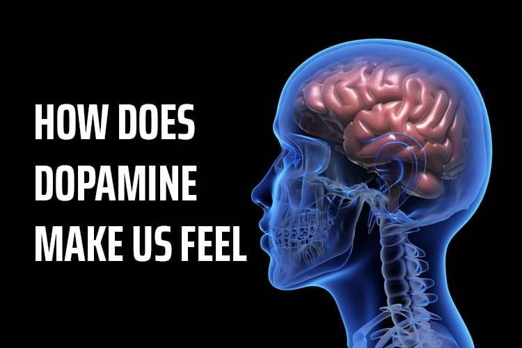 How does Dopamine make us feel?